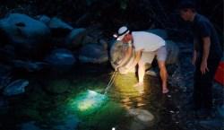 大梅部落》找會走路的樹 夜訪溪中霸王蝦