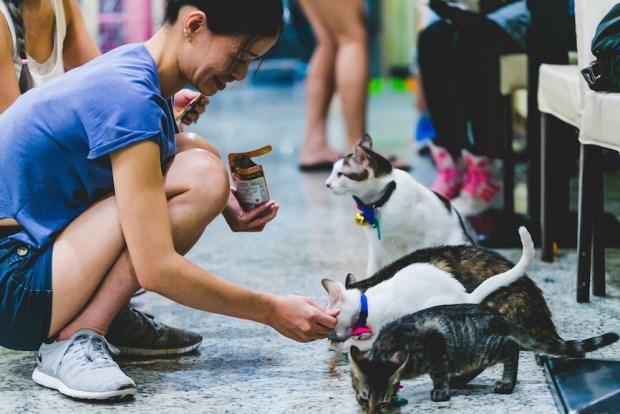 心富足 窮而樂的三個愛貓女子