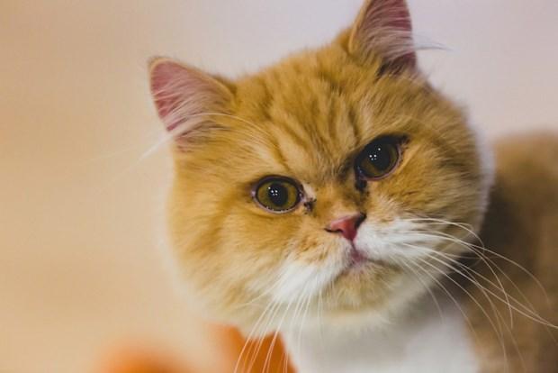 以貓為本 串連愛的「貓藝家」