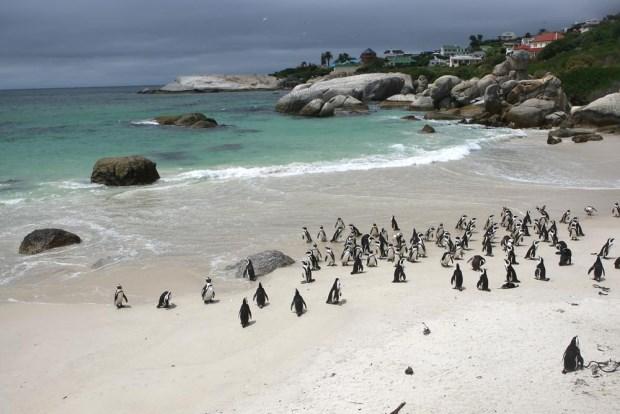 非洲奢華定制旅遊專家