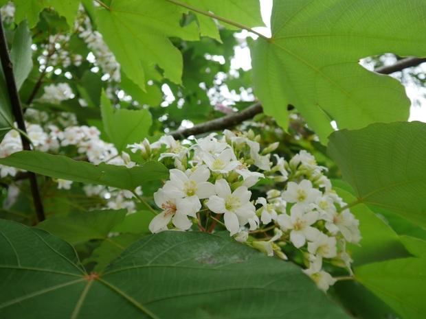馥蘭朵里山秘境桐花如雪 遊螢點點