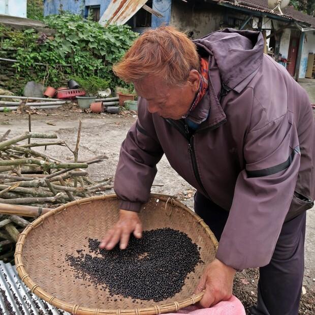 原住民族的絕佳補品—樹豆