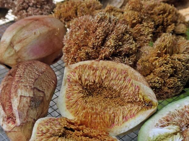 臺灣原生種的消暑涼品—愛玉