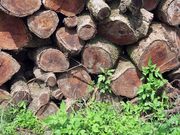 森林資源的現代產業應用